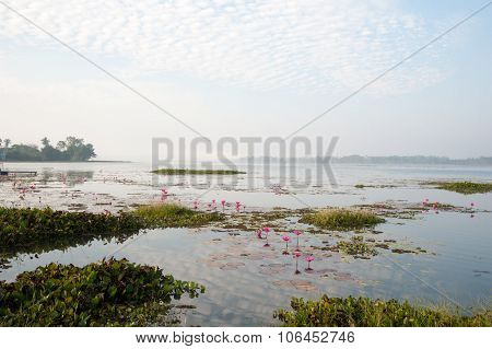 Pink Lilly Pads Misty Landscape Water Rivers Lakes Asia Global Ecology