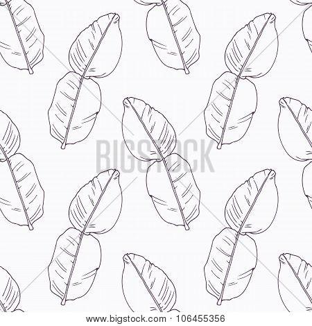 Hand drawn kaffir lime branch outline seamless pattern