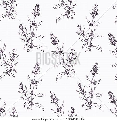 Hand drawn hyssop branch outline seamless pattern