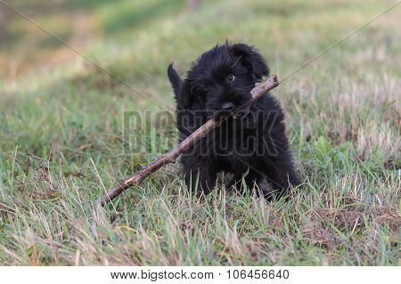 Cute Puppy With Stick In Its Mouth