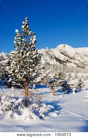Flatiron_Winter2