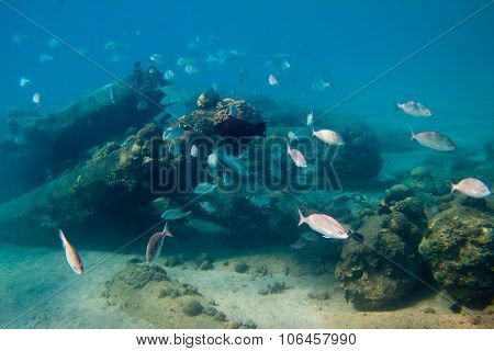Flock Of Fishes Is On The Seabed
