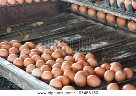 Separate Size Eggs Machines