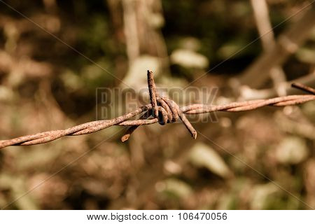 Vintage Barbed Wire Fence