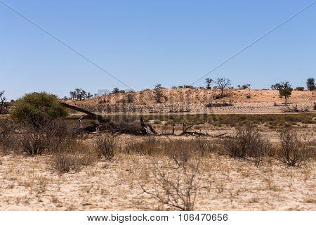 Kgalagadi Transfontier Park