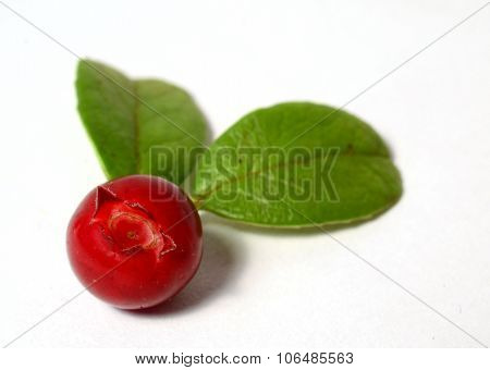 one fresh ripe cranberry or cowberry with leaves on white