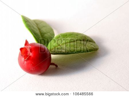 one fresh ripe cranberry or cowberry with leaves on white like butterfly