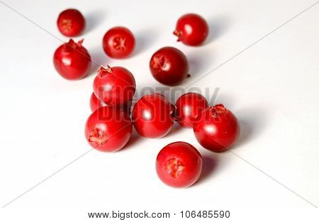 placer of fresh ripe cranberries or cowberries on white