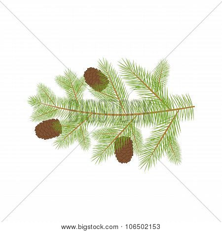 Small Christmas fur-tree branch with natural pine cones