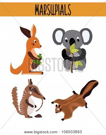 Cartoon Set of Cute Animals marsupials living in Australia and its Islands. Kangaroo, squirrel, numb