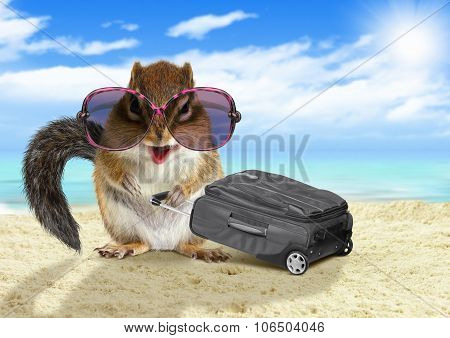 Funny Tourist, Animal Squirrel With Suitcase At Beach