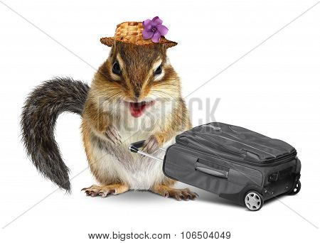 Funny Traveler, Animal Chipmunk With Suitcase On White