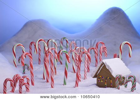 Christmas Candy Cane Forest Blue Sunset