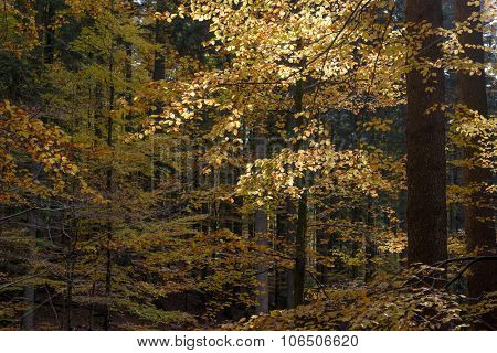 Yellow leaves in dark forest