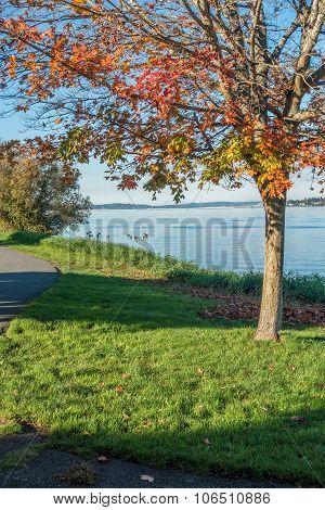 Lake Washington - Geese 4