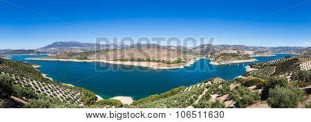 Olive Trees Around Lake Iznajar In Andalucia