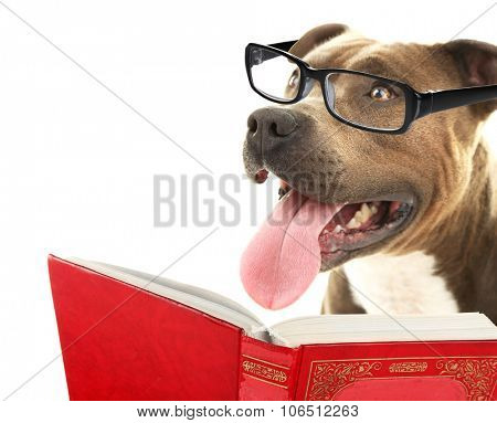 Cute dog in eyeglasses with book isolated on white