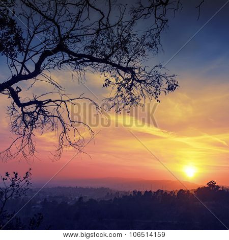 Tree branches silhouette with scenic sunset sun over colorful sky background. Los Angeles, California.