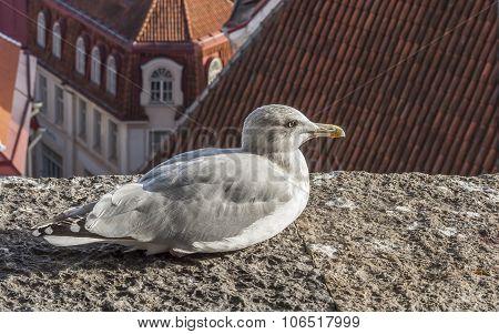 Albatross Bird On The Roof