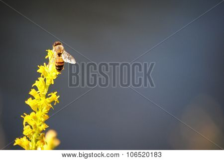 a bee landing on a wild flower looking for nectar