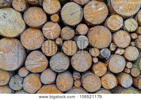 Pile Of Raw Timber