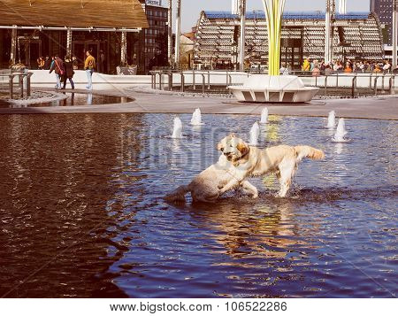 Retro Look Dogs In Water