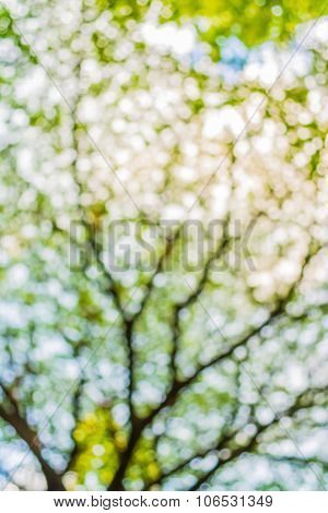 Blur Image Of Abstract Bokeh Of Green Tree Color Background.
