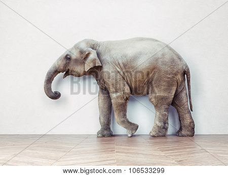 the elephant calm in the room near white wall. Creative photo combination  concept