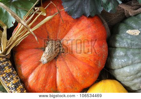 Corn Maize Pumpkin Harvest  Green Grocer Stall