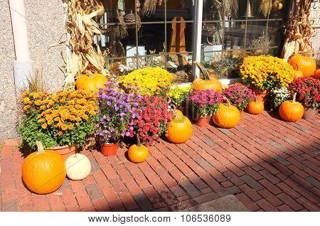Sidewalk Pumpkin Winter Squash Crop Harvest