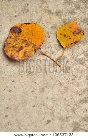 Two Yellow Fall Leaves On Concrete Background