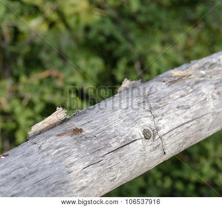 Dregonfly