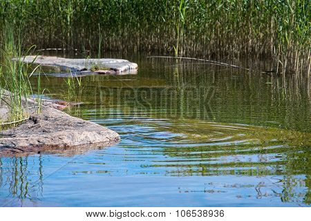 Granite rocks and aquatic grass