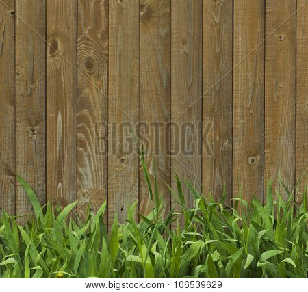 Green Grass On A Background Of Wooden Fence