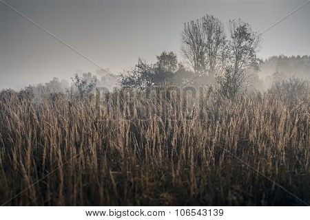 Fog on a meadow in the morning in Lesser Poland