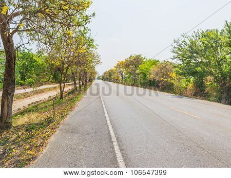 Golden Tree Flower (yellow Pui) And Street In Summer Day