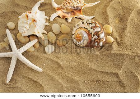 shells and stones on sand