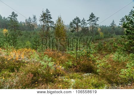 Young Green Pines