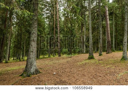 Many Trees In The Forest
