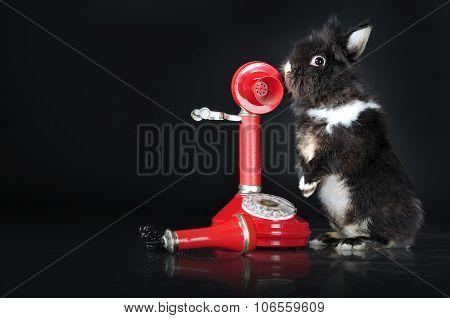 Cute Bunny Talking On Retro Telephone