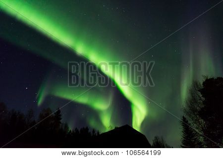 Beautiful Aurora Borealis Over The Tree Tops