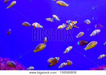 Tropical Aquarium With Clownfish