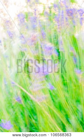 Abstract Motion Blur Lavander Flowers Background