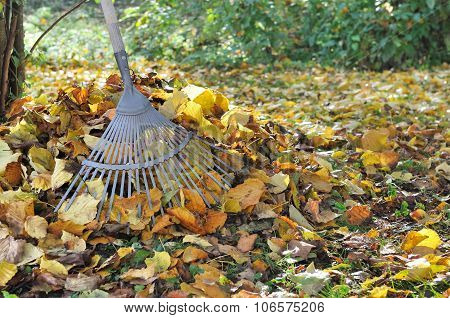 Gardening In Autumn