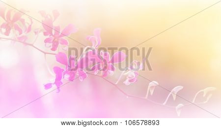 Abstract Flower Background. Made With Color Filters In Soft Color And Blurred Style .