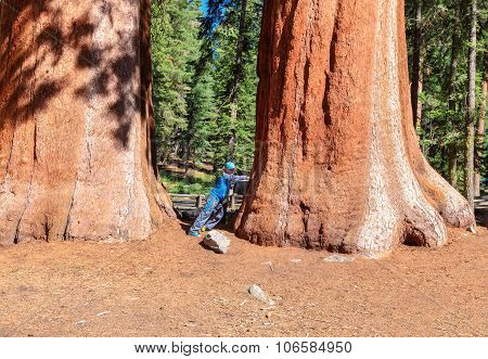The boy standing in front of giant sequoia tree