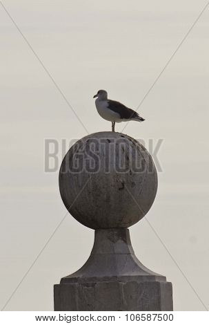Seagull On The Columns Wharf Viewpoint