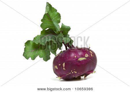 Purple German Turnip