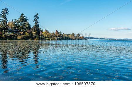 Lake Washington - Shoreline 8