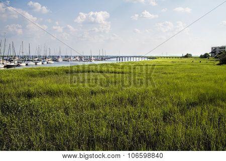 Verdant Green Grassland St. Simon's Island Georgia